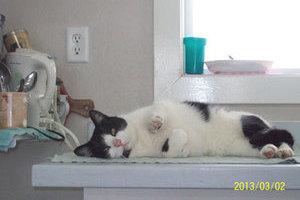 A relaxed-looking cat takes it all in at Glenpark Pet Hotel where pet care is our first priority.