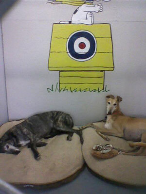 Comfy canines enjoy the Snoopy-themed room at Glenpark Pet Hotel near the International Airport