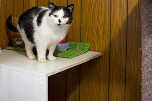 A feline Glenpark Pet Hotel guest explores his roomy, interesting surrroundings